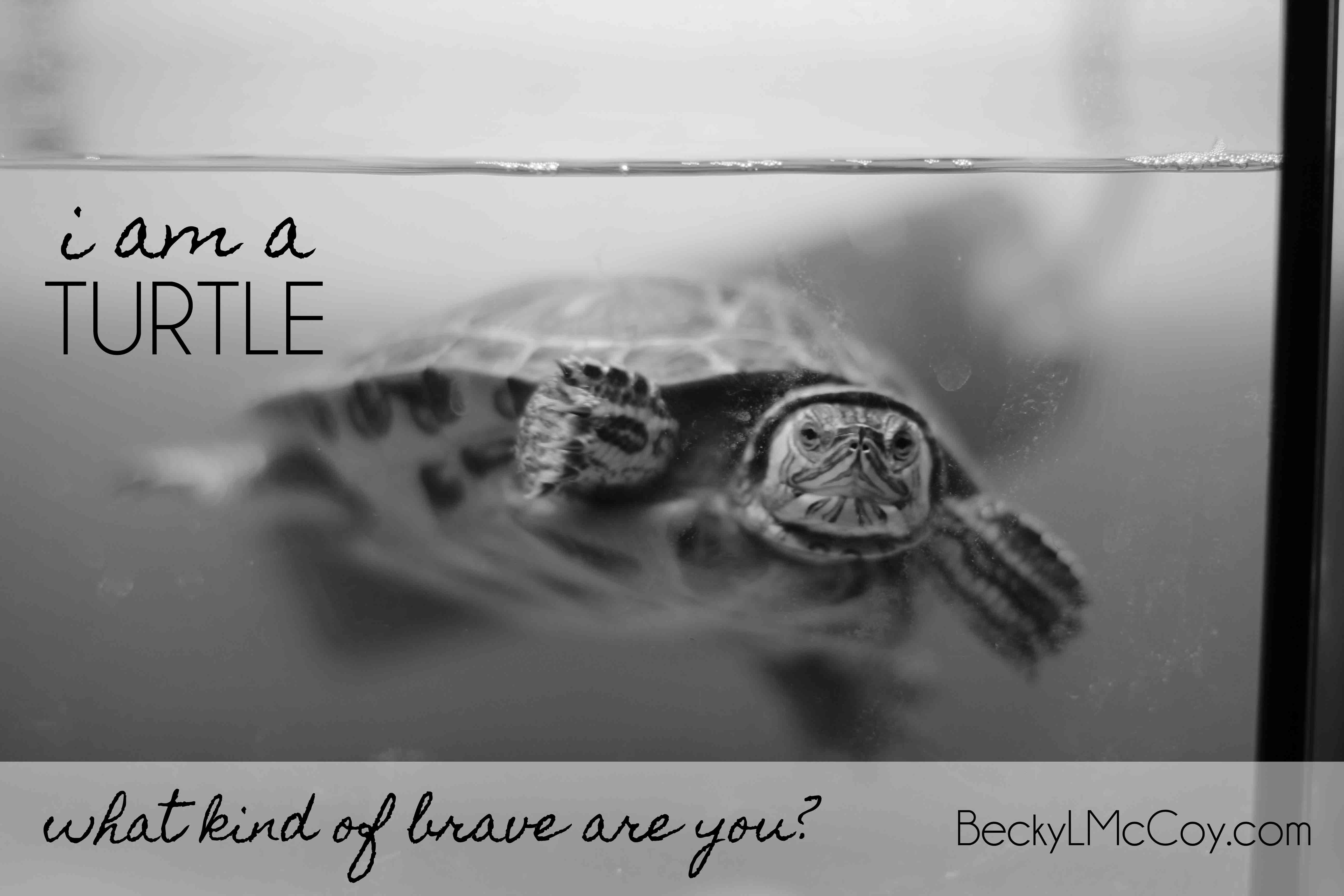 What Kind of Brave Are You? | BeckyLMcCoy.com